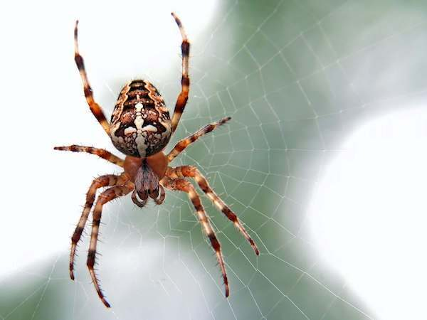 Extermination araignée gestion parasitaire